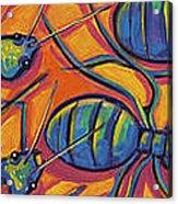 Ants Acrylic Print