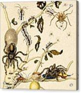 Ants Spiders Tarantula And Hummingbird Acrylic Print
