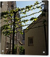 Any Space Can Be A Garden - Creative Urban Gardening From Amsterdam Acrylic Print