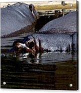 Anybody Want To Play Submarines? Acrylic Print by Graham Palmer