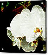 Aos White Orchid 1 Acrylic Print