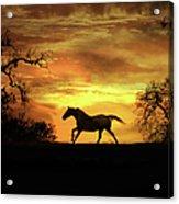 Appaloosa Sunset Acrylic Print