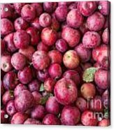 Apple Background Acrylic Print