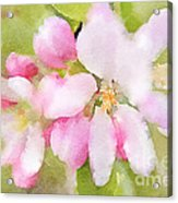 Apple Blossom Watercolour Acrylic Print
