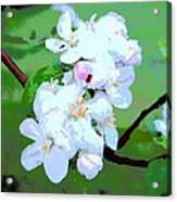 Apple Blossoms In The Spring - Painting Like Acrylic Print