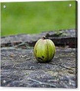 Apple Gourd Acrylic Print