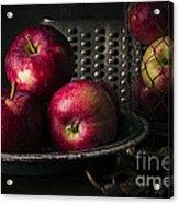 Apple Harvest Acrylic Print