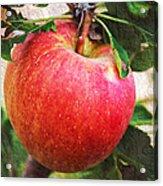 Apple On The Tree Acrylic Print