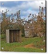 Apple Orchard 1 Acrylic Print