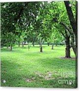 Apple Orchard - Kean University Acrylic Print