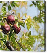 Apple Pickin' Time Acrylic Print