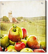 Apple Picking Time Acrylic Print by Edward Fielding