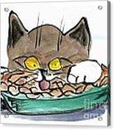 Apple Pie Vs. Hungary Cat Acrylic Print