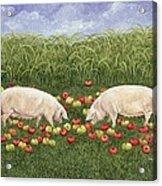 Apple Sows Acrylic Print
