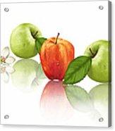 Apple Story Acrylic Print