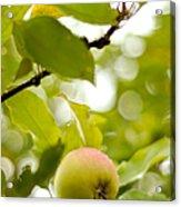 Apple Taste Of Summer 2 Acrylic Print