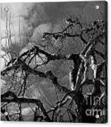 Apple Tree Bw Acrylic Print