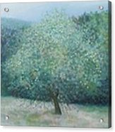 Apple Tree Acrylic Print