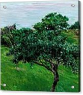 Apple Trees By The Sea Trouville Acrylic Print