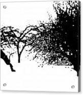 Apple Trees Acrylic Print