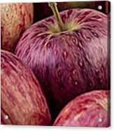 Apples 01 Acrylic Print
