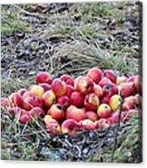 #apples Acrylic Print