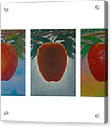 Apples Triptych Acrylic Print by Don Young
