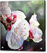 Apricot Flowers Acrylic Print by Irina Sztukowski
