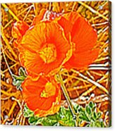 Apricot Globemallow In Vermilion Cliffs National Monument-arizona Acrylic Print