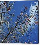 April Blossom Acrylic Print