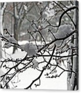 April Snow Acrylic Print by Kay Novy