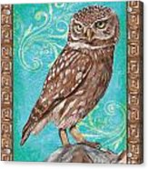 Aqua Barn Owl Acrylic Print
