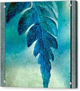 Aqua Fern Acrylic Print