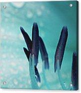 Aquamarine Water Acrylic Print