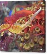 Aquarium Fun Acrylic Print