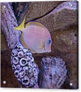 Aquarium Impression Acrylic Print