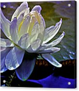 Aquatic Beauty In White Acrylic Print