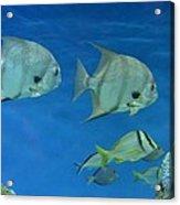 Aquatic Blues Acrylic Print