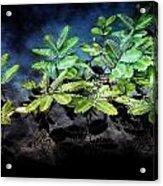 Aquatic Leaves Acrylic Print
