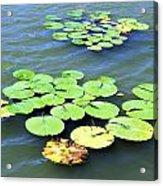 Aquatic Plants Acrylic Print