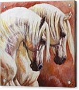 Arab Horses Acrylic Print by Silvana Gabudean Dobre