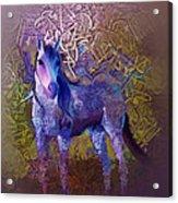 Arabian Horse 2  Acrylic Print