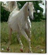 Arabian Horse Abstract Acrylic Print