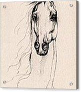 Arabian Horse Drawing 25 Acrylic Print