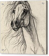 Arabian Horse Drawing 37 Acrylic Print