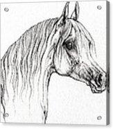 Arabian Horse Drawing 47 Acrylic Print