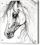 Arabian Horse Drawing 49 Acrylic Print