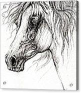 Arabian Horse Drawing 54 Acrylic Print