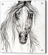 Arabian Horse Drawing 55 Acrylic Print