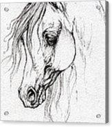 Arabian Horse Drawing Acrylic Print